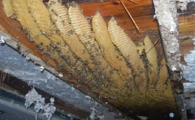 about 2guyswithhives services bee removal swarm recovery